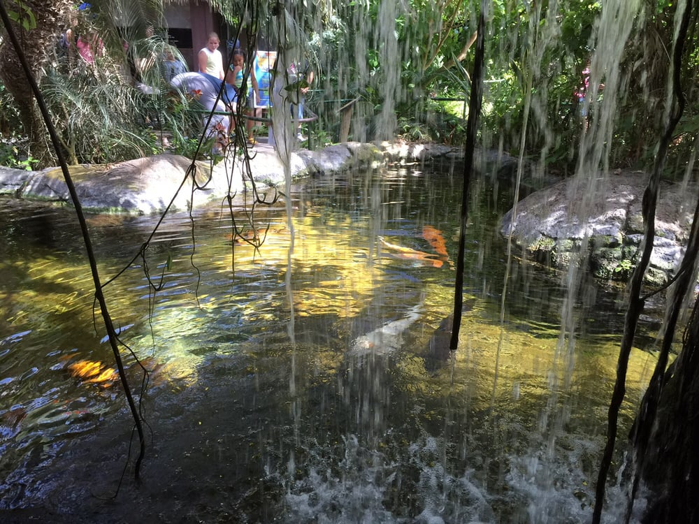 Koi pond in the buttery enclosure yelp for Koi ponds near me