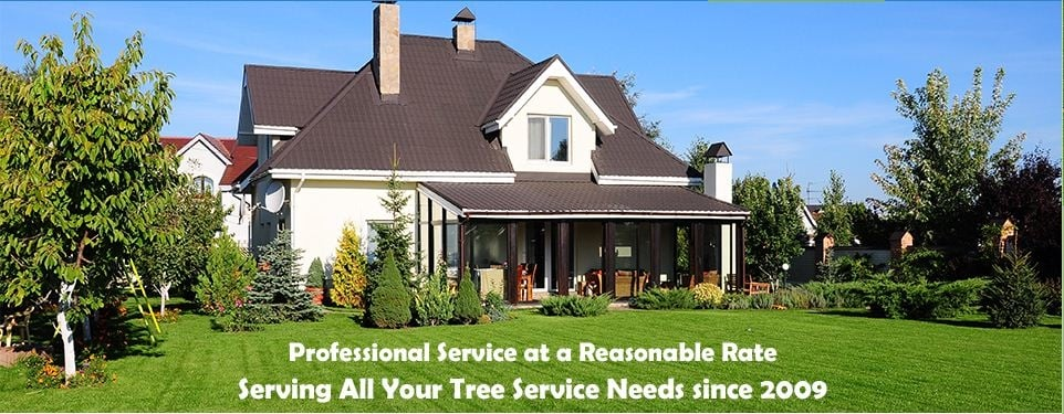 Arbor Pro's Tree Service: 626 Anderson St, Curwensville, PA