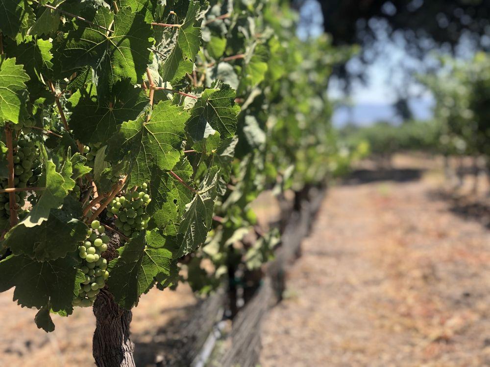 Roblar Winery: 3010 Roblar Ave, Santa Ynez, CA