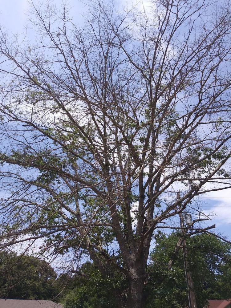 Joe Jackson Tree Service: Canton, MS
