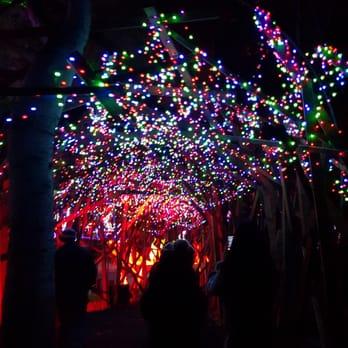 Photo Of LA Zoo Lights   Los Angeles, CA, United States. Twinkle Tunnel