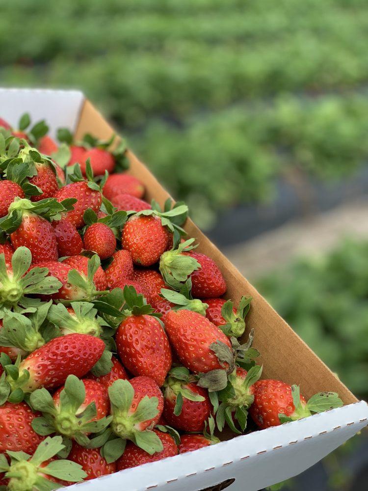 Oak Haven Farms & Winery: 32418 Avington Rd, Sorrento, FL