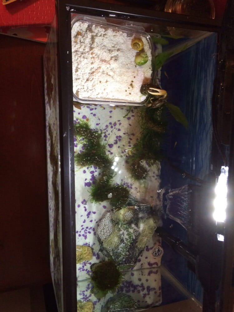 Fiddler crab dry area in my tank filled with all the live for Fish tank heater petco