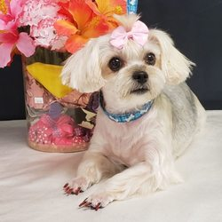 Top Dog Grooming Salon 148 Photos Pet Groomers 1101 E Oakland