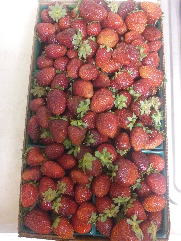 FL Strawberries: W Covell Blvd County Rd 98, Davis, CA