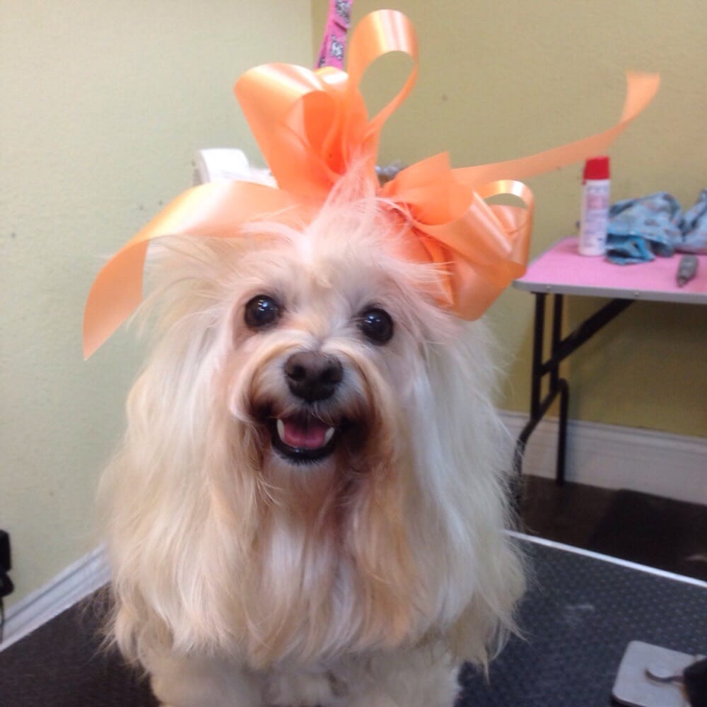 best in show dog grooming   58 photos   pet groomers