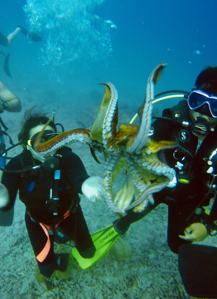 Social Spots from Oahu Diving