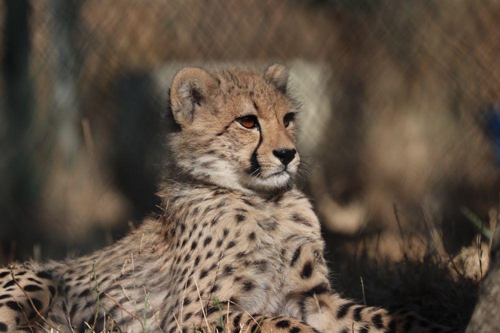 Wildlife Safari: 1790 Safari Rd, Winston, OR