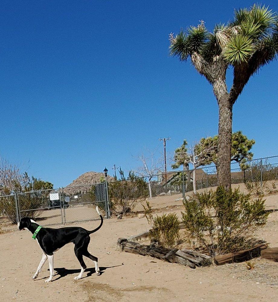 Joshua Tree Pet Resort: 63381 Quail Springs Rd, Joshua Tree, CA