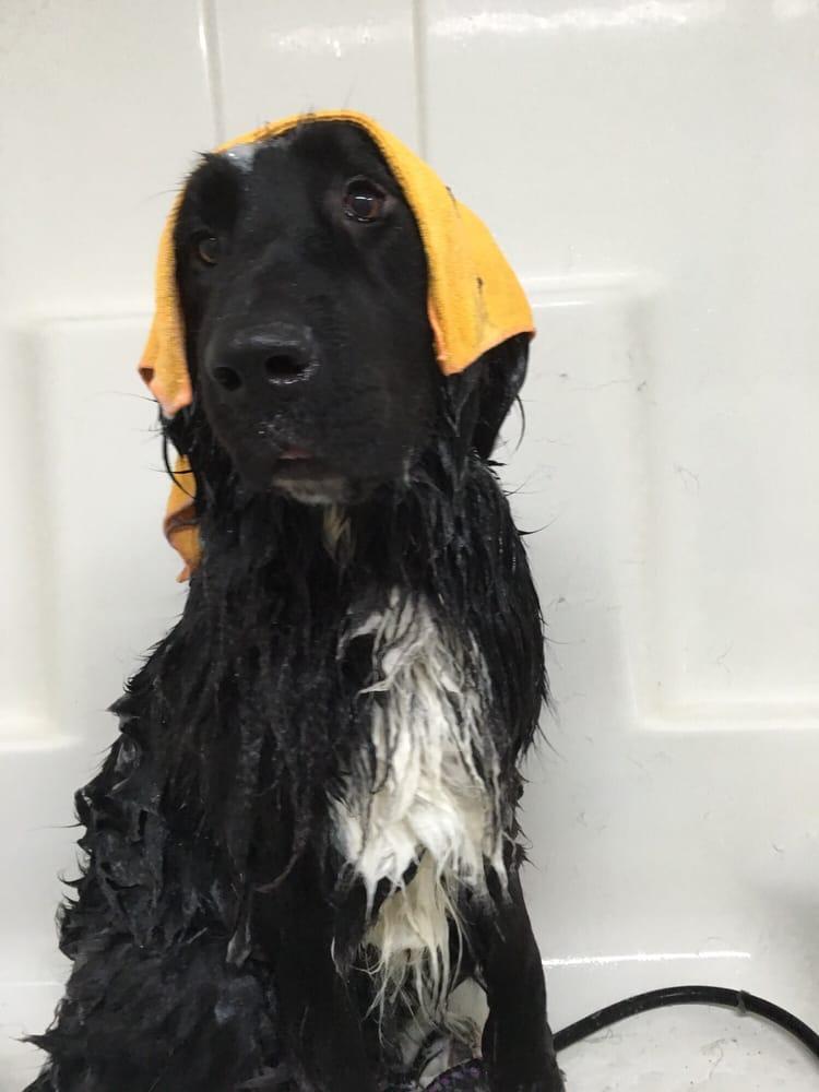 T's Dog Grooming: 611 W Main St, Carlton, OR