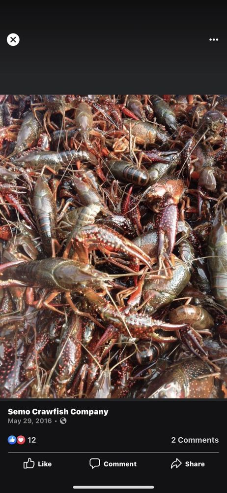 Semo Crawfish: 3582 E Jackson Blvd, Jackson, MO