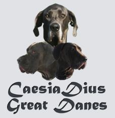 Caesia Dius Great Danes: 116 Dorris Dr, Fairfield, IL