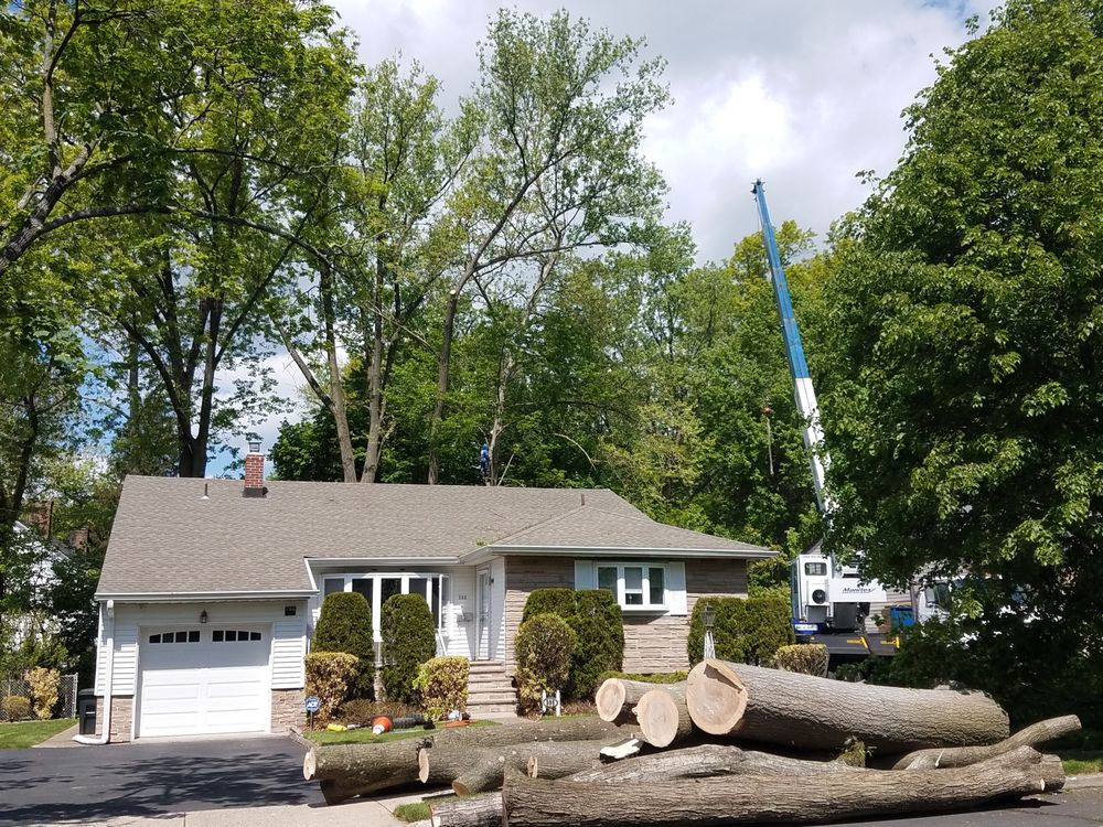 O'Brother Tree Service: 55 Banta Pl, Bergenfield, NJ