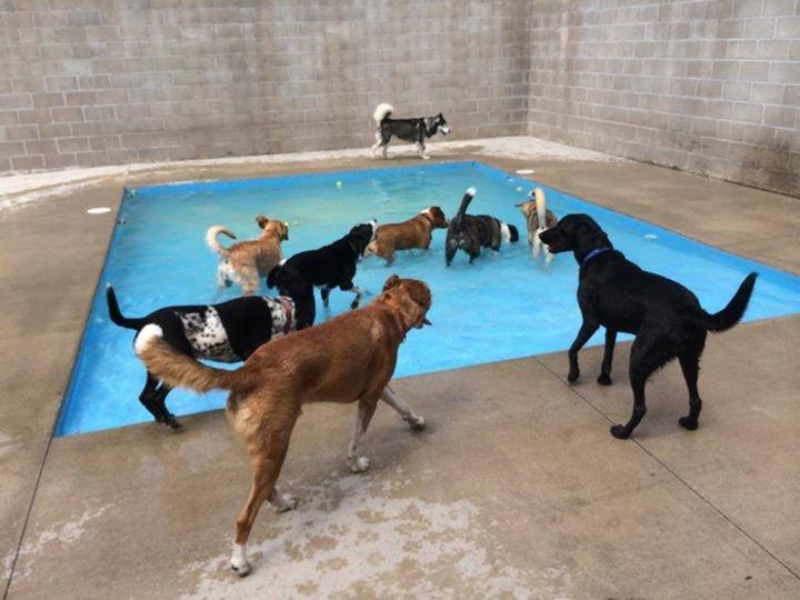 Oneka Pet Resort: 13477 Fenway Boulevard Cir N, Hugo, MN