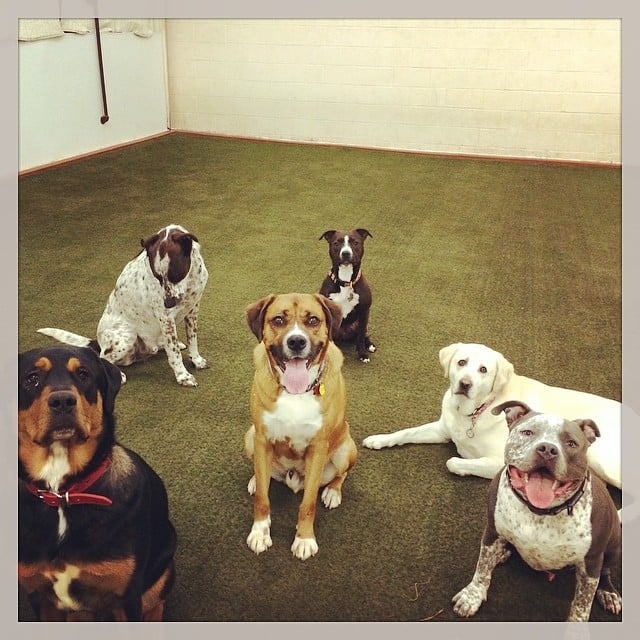 Dog Town 18 Reviews Pet Boarding Pet Sitting 252