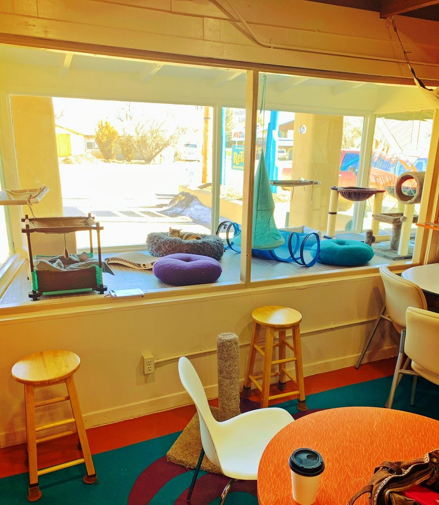 Retails Resale Store & Cat Cafe: 1204 Paseo Del Pueblo Norte, El Prado, NM