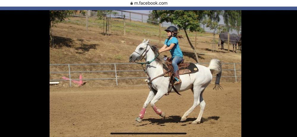 Sundance Hills Equestrian Center: 32109 Caminito Quieto, Bonsall, CA