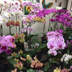 Photo Of Armstrong Garden Centers Glendale Ca United States Orchid Section
