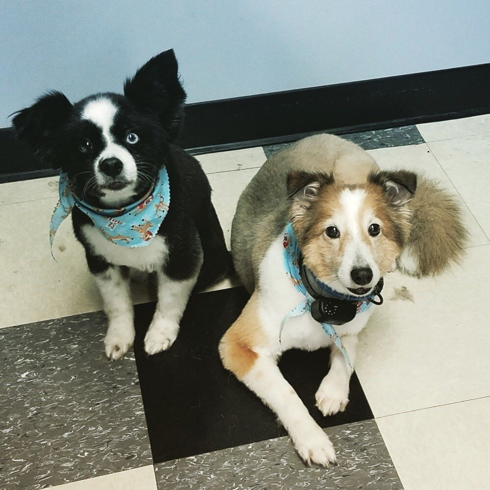 Best Friends Pet Grooming: 721 Myrtle Ave, Boonton Township, NJ