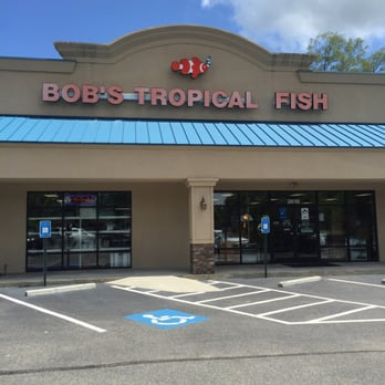 Bob s tropical fish 10 photos local fish stores 3619 for Local fish stores