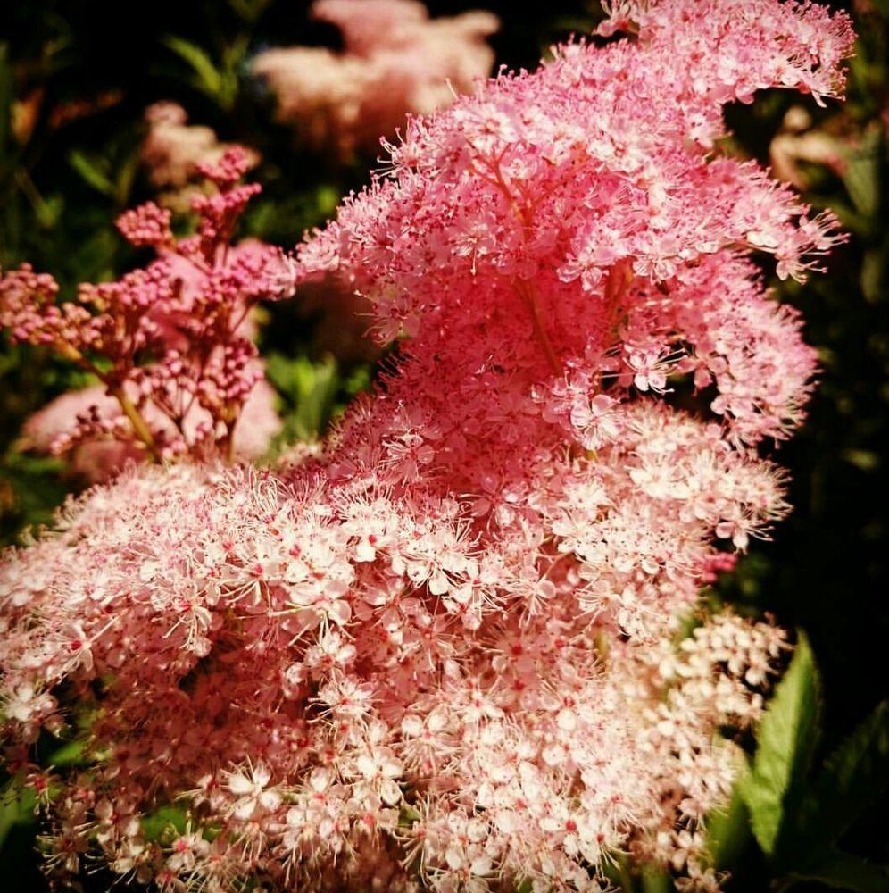 Naturescaping Wildlife Botanical Garden: 11000 NE 149th St, Brush Prairie, WA