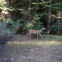 Summerdale Campground - Hwy 41, Fish Camp, CA - 2019 All You Need to