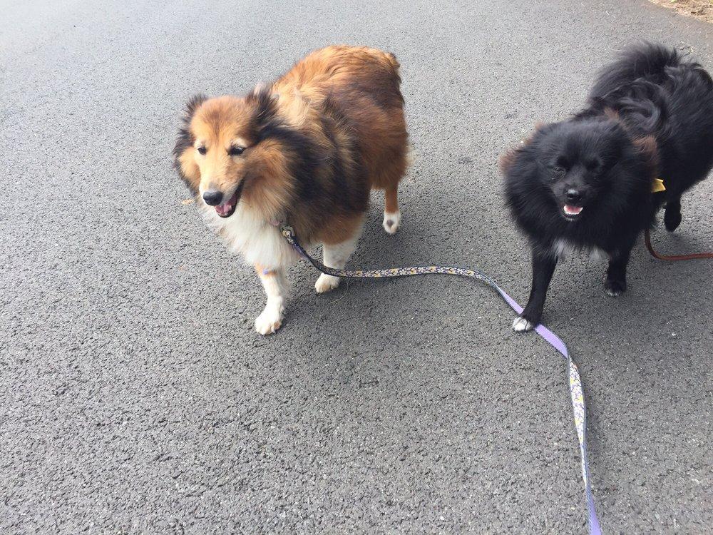Lucky Dog Pet Service