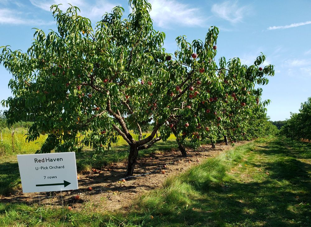 Schultz Fruitridge Farms: 60139 County Rd 652, Mattawan, MI