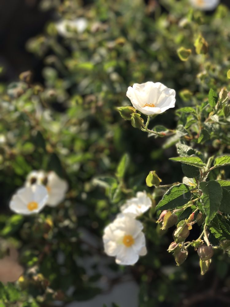 Ramirez Landscaping & Plant Nursery: Contra Costa County, CA