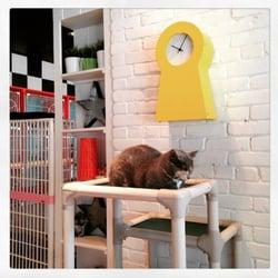 Photo Of Sohocats Luxury Feline Hotel Beverly Ma United States