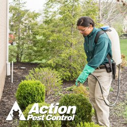 Action Pest Control: 1229 Sweeney St, Owensboro, KY