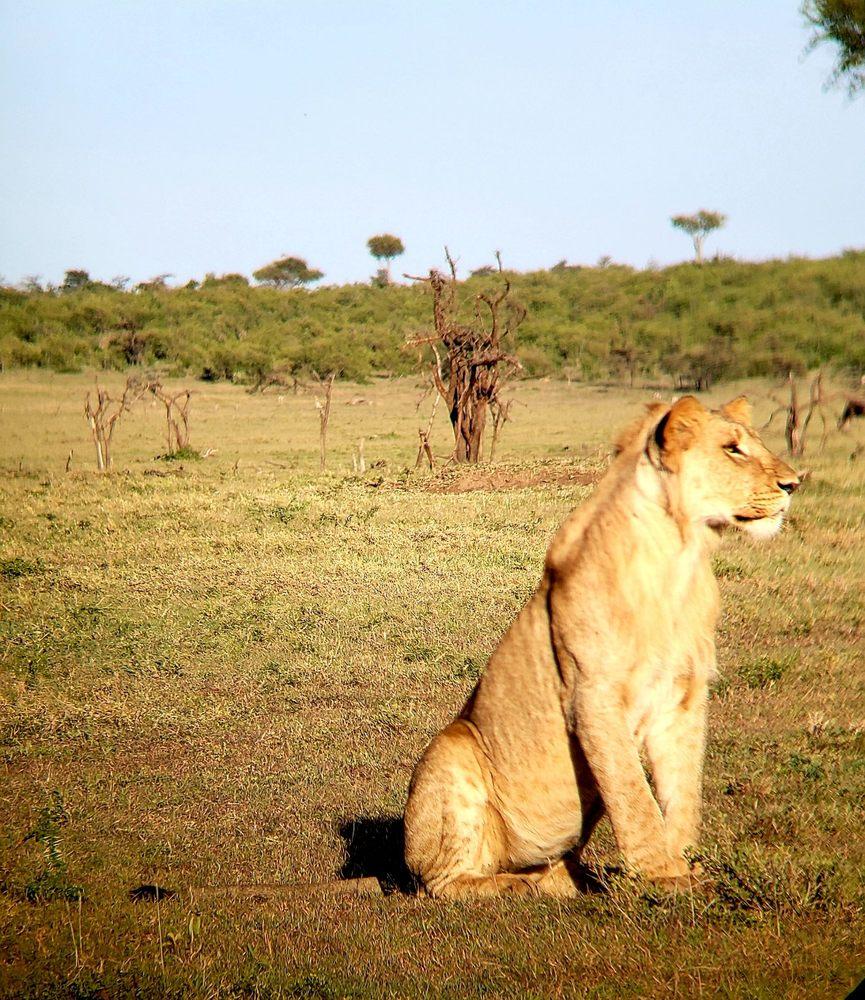 AfricanMecca Safaris: 1275 Glenlivet Dr, Allentown, PA