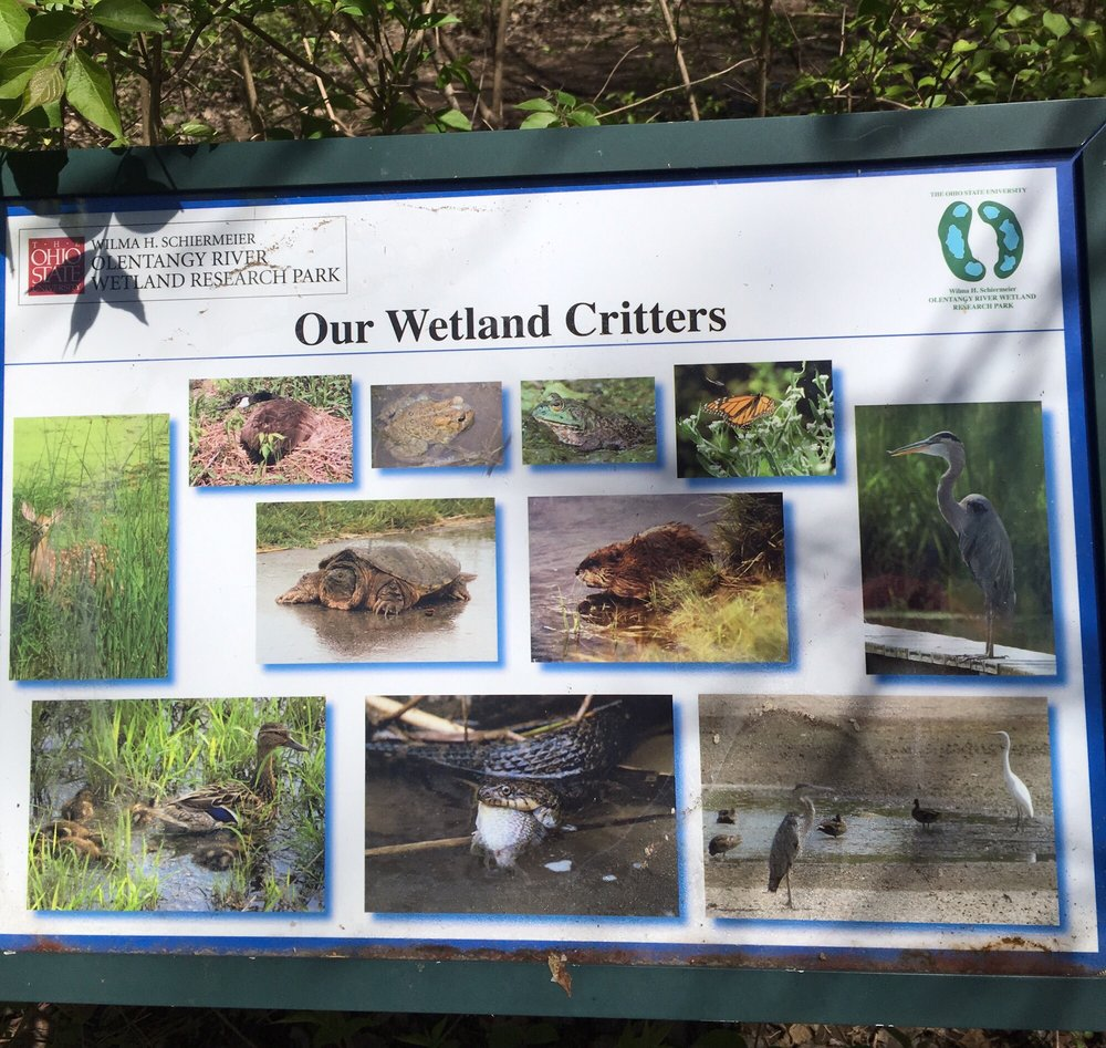 Olentangy River Wetlands Research Park