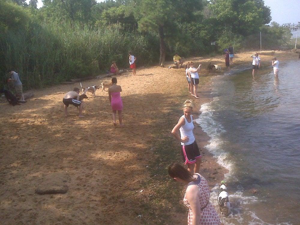 Dog Beach Yelp
