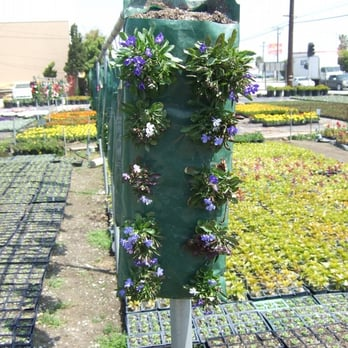 Photo Of Okada Nursery Gardena Ca United States