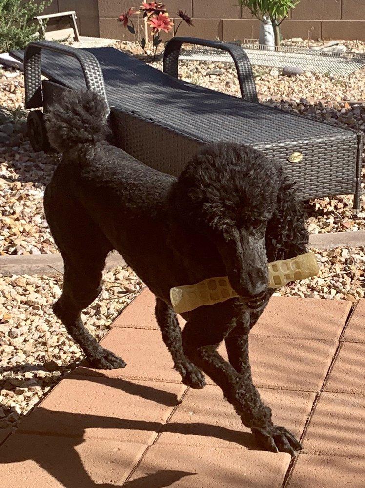 Desert Dog Day Spa: 50 S Arrowhead Ln, Mesquite, NV
