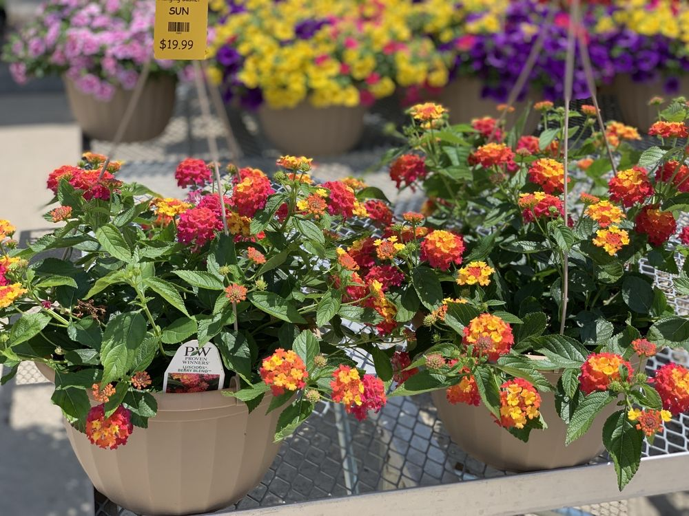 Baeten's Nursery and Greenhouses: 364 Frogtown Rd, Union, KY