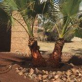 Photo Of Moon Valley Nurseries Coachella Ca United States Notice The Detail