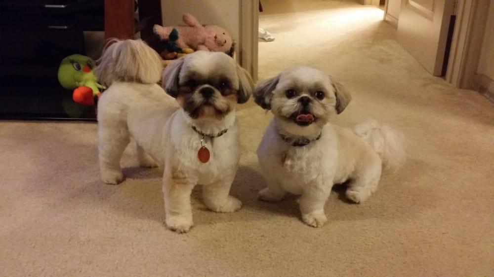 Yelp Dog Grooming Austin