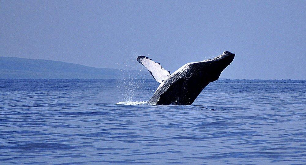 Kaanapali Ocean Adventures - 48 Photos & 36 Reviews - Boating ...