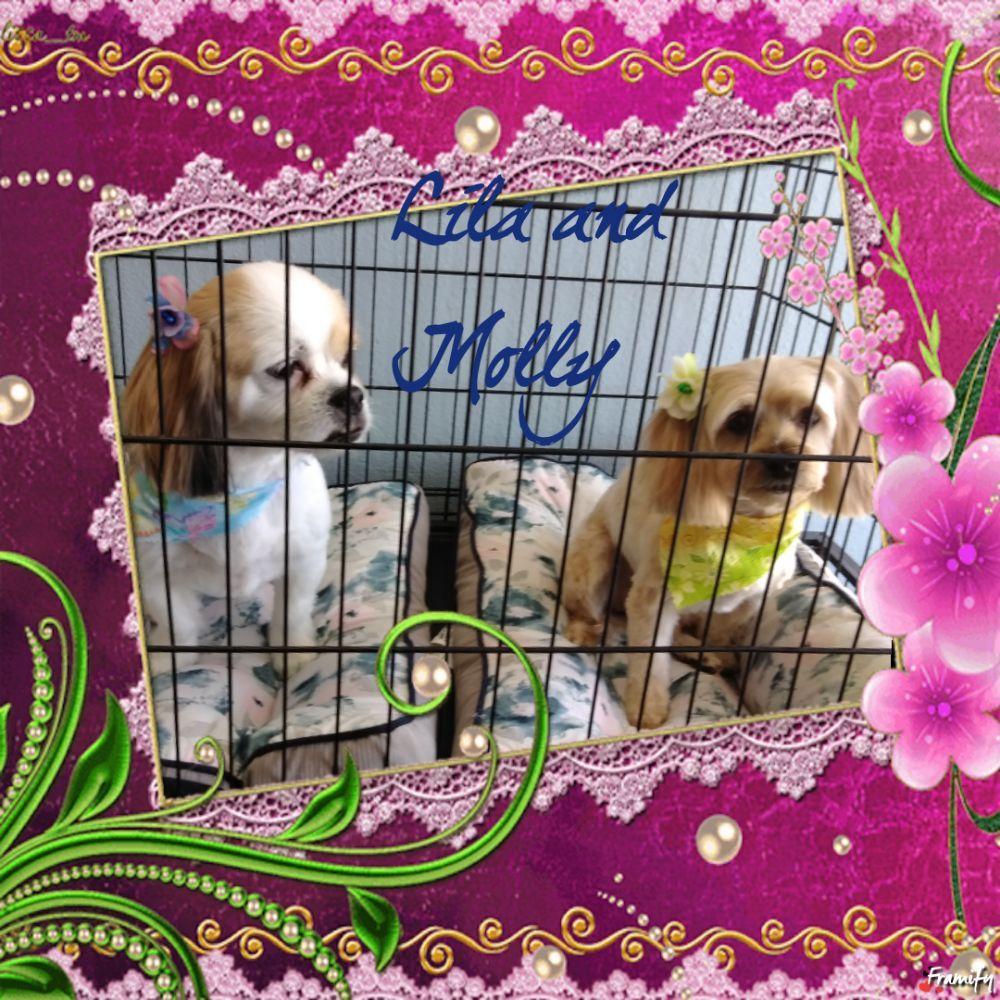 Charisma Dog Grooming: 13507 Meridian E, Puyallup, WA