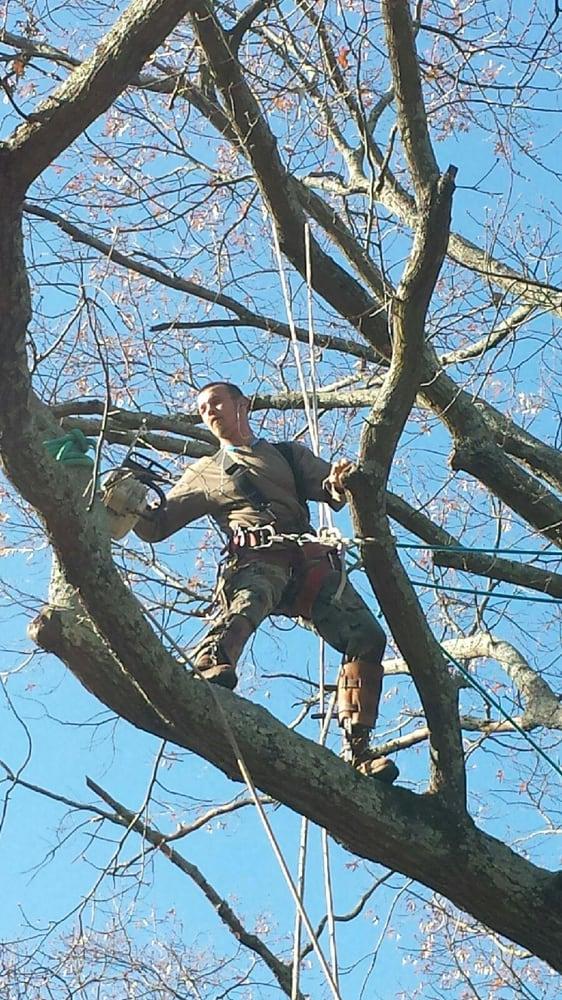 Prestige Tree Experts: Acworth, GA