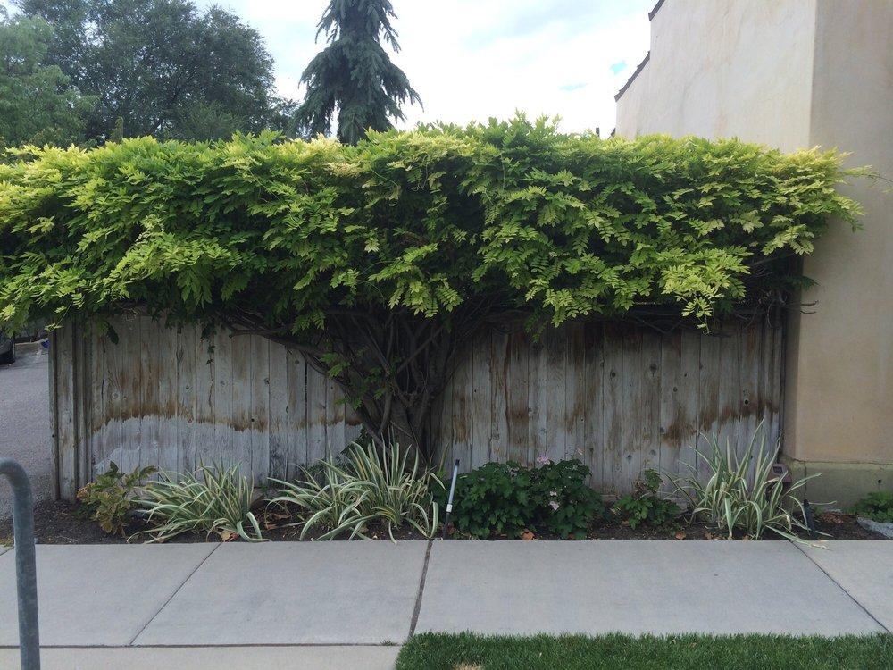 Photo of The Kura Door - Salt Lake City UT United States. Gardening & Gardening game on point - Yelp pezcame.com