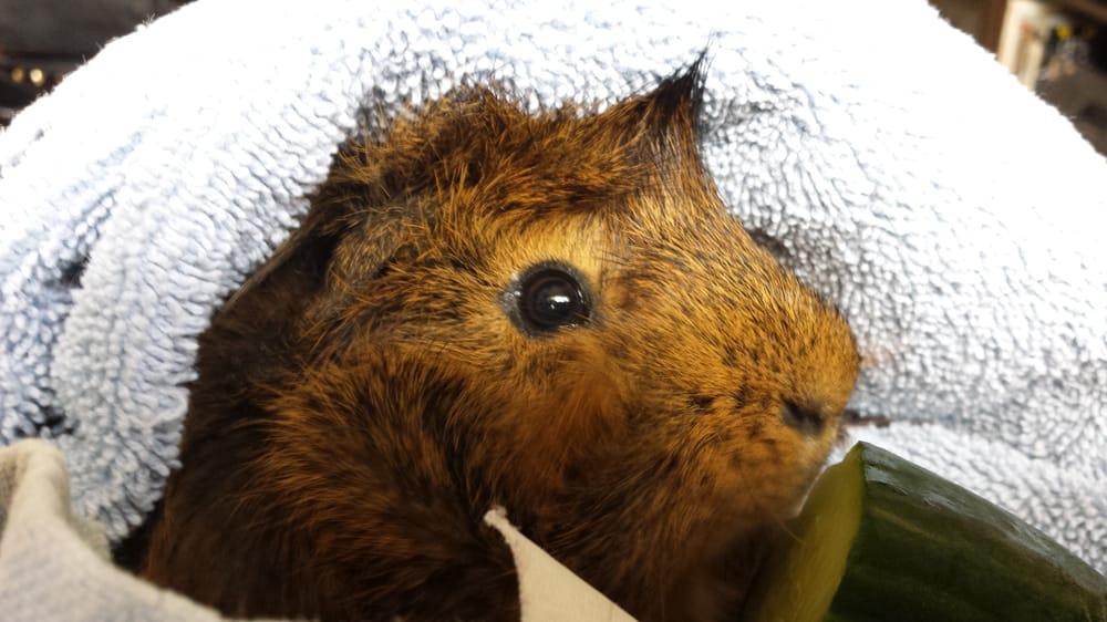 Furbaby Pet Care: San Diego, CA