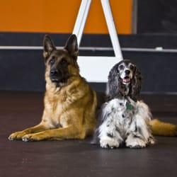 Dog Obedience Group - 2019 All You Need to Know BEFORE You