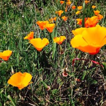 Photo of Russian Ridge Open Space Preserve - Palo Alto, CA, United States