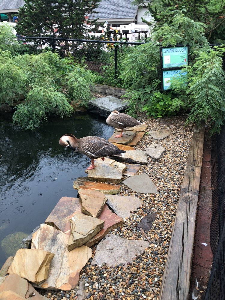 Social Spots from Miller Park Zoo