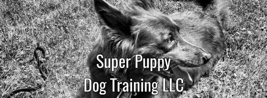 Super Puppy Dog Training: 8617 Daly Rd, Cincinnati, OH
