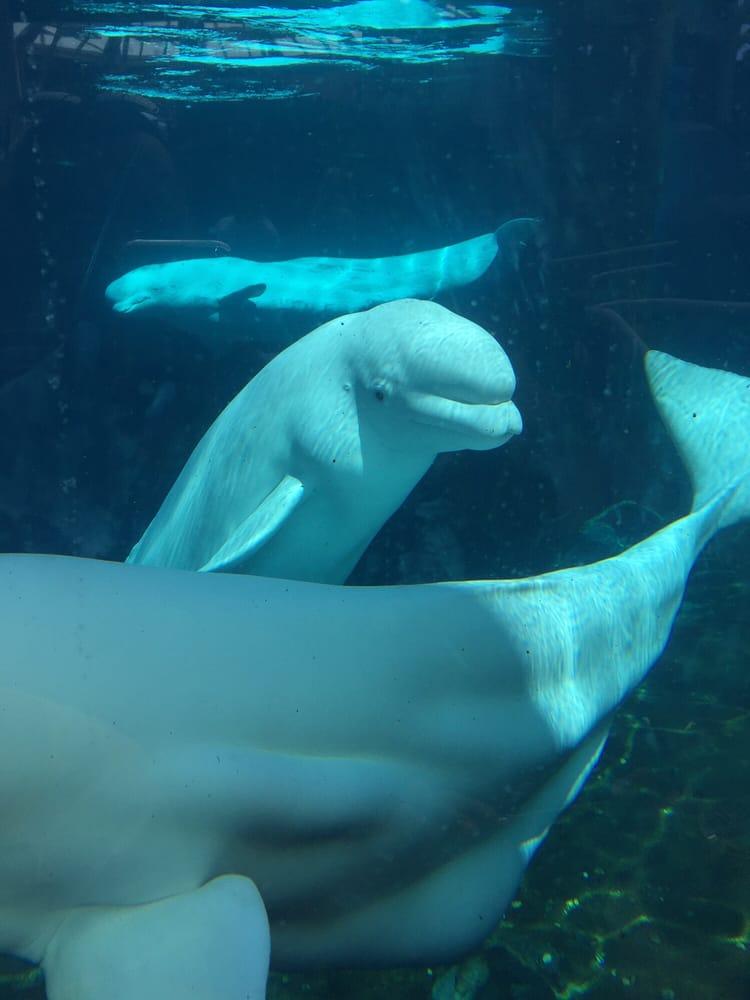 Photos For Mystic Aquarium Yelp