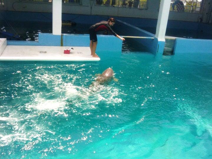 Photos For Clearwater Marine Aquarium Yelp